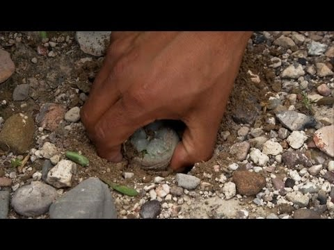 Peyote as Medicine - The Power of Native Plants to Heal