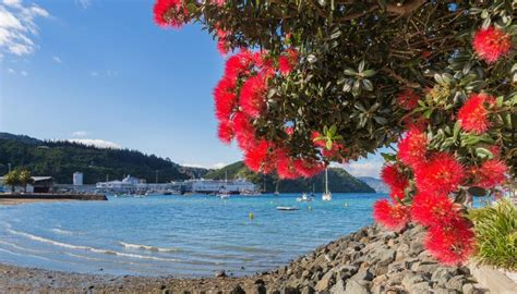 Warm and fine Christmas day for most of New Zealand   Newshub