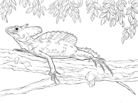 Green Basilisk coloring page | Free Printable Coloring Pages