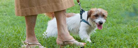 How to Help Old Dogs Feel Young Again | Hill's Pet