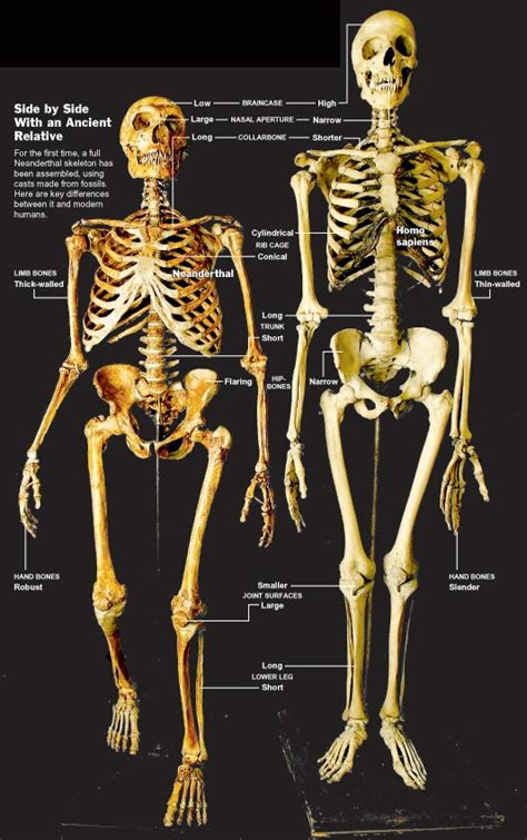 What it means to be a human: Homo Neanderthalensis