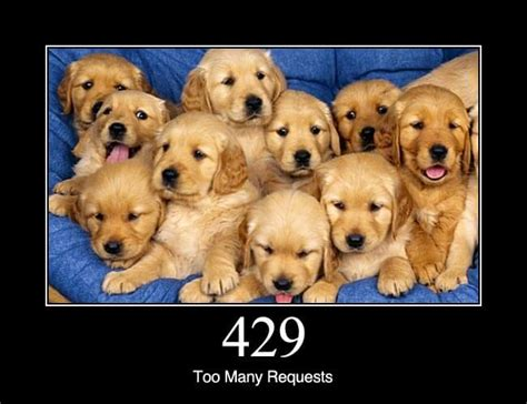 Dogs Explain What Different HTTP Status Codes Mean