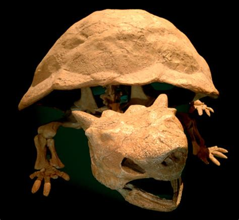 Giant 'King Koopa' Turtle Not As Extinct As Previously