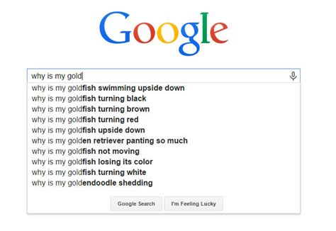 38 Hilarious Google Suggestions That Will Make You LOL
