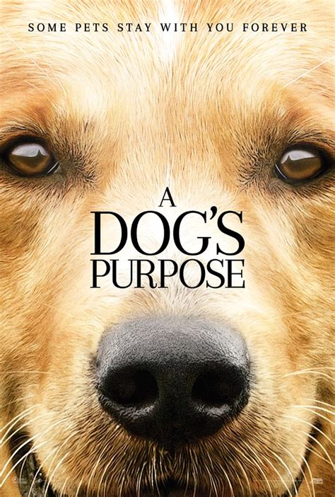 A Dog's Purpose: Movies For Juniors   Book tickets at