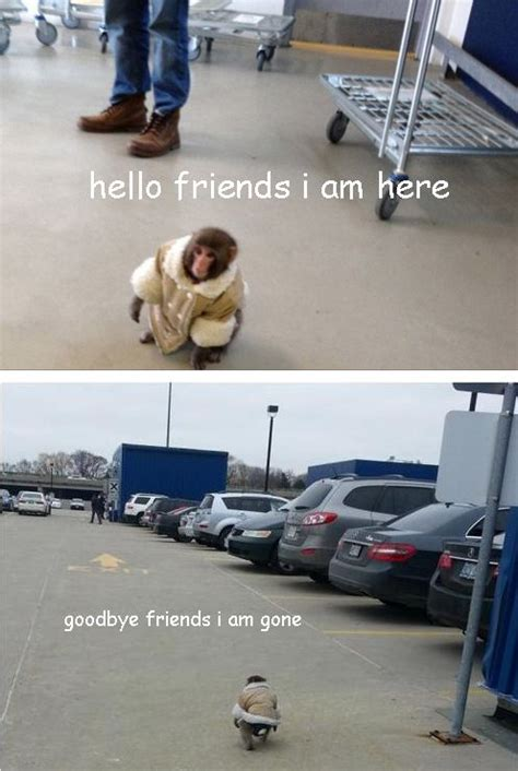 The Best Ikea Monkey Memes ~ Damn Cool Pictures