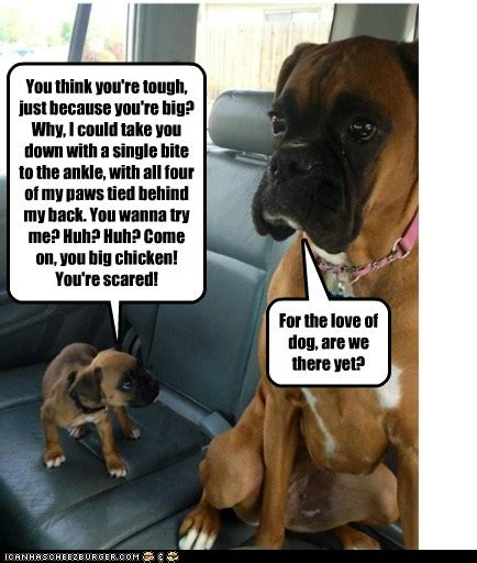 I Has A Hotdog - are we there yet - Funny Dog Pictures